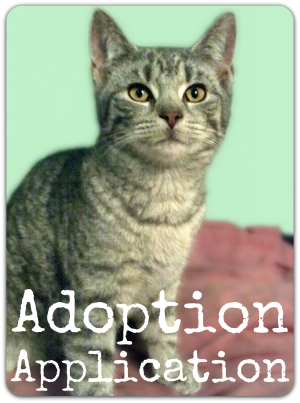 cat adoption application