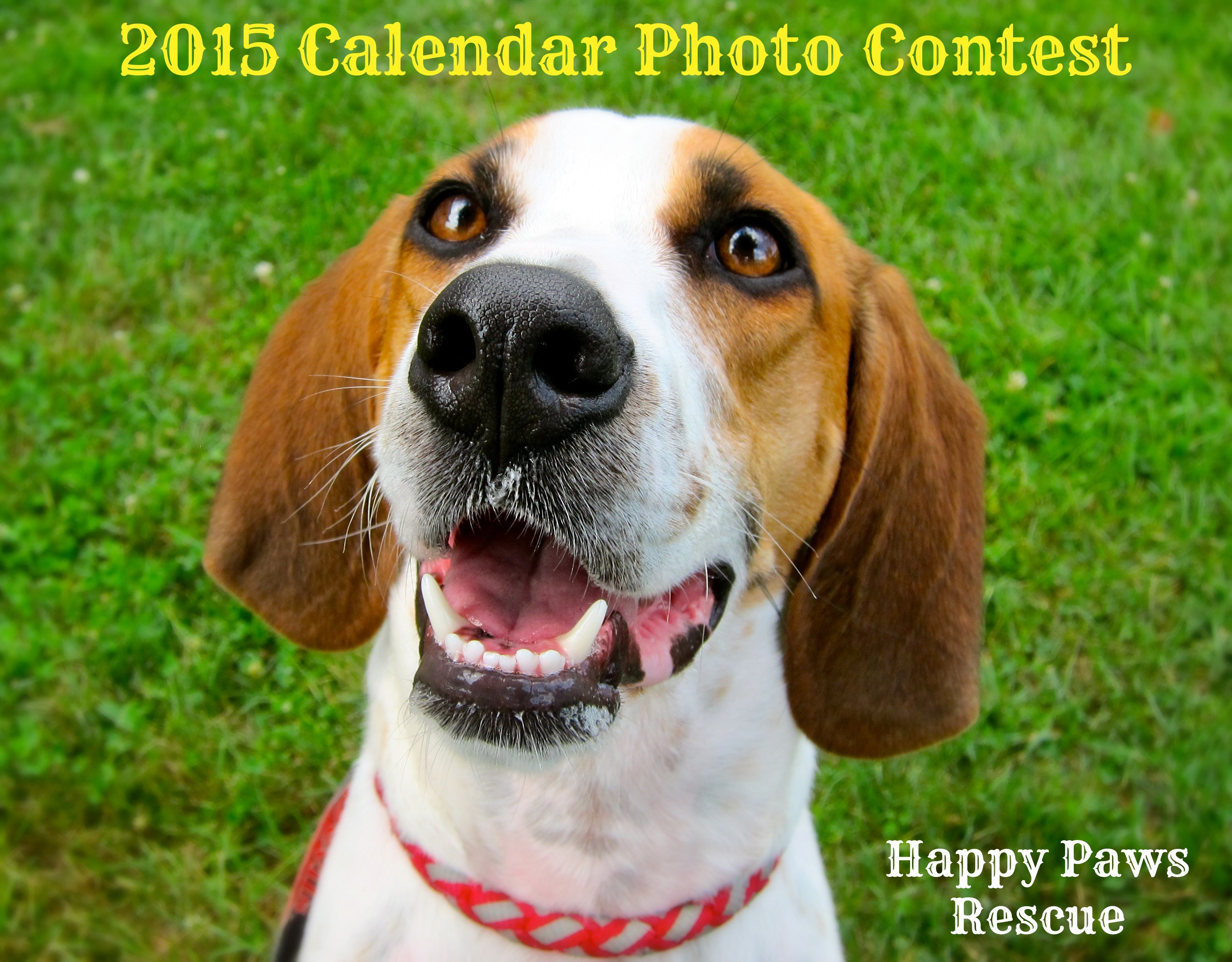 Calendar Photography Contest : Calendar photo contest